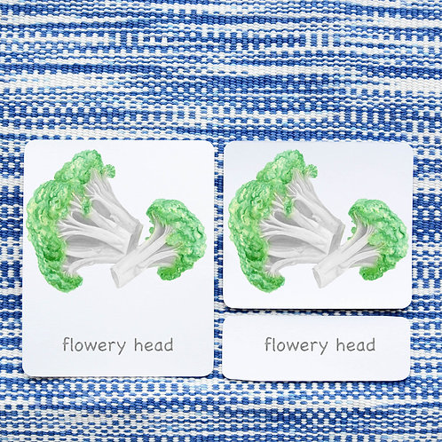 PARTS OF: BROCCOLI VEGETABLE