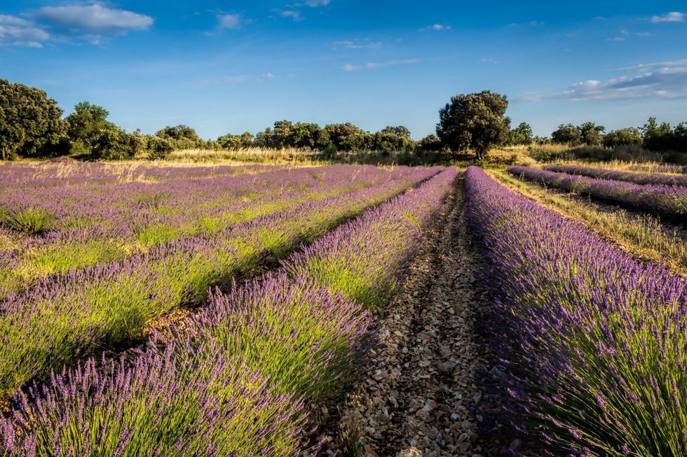Languedoc-Lavande-Hexatrek-Randonnée.jpg