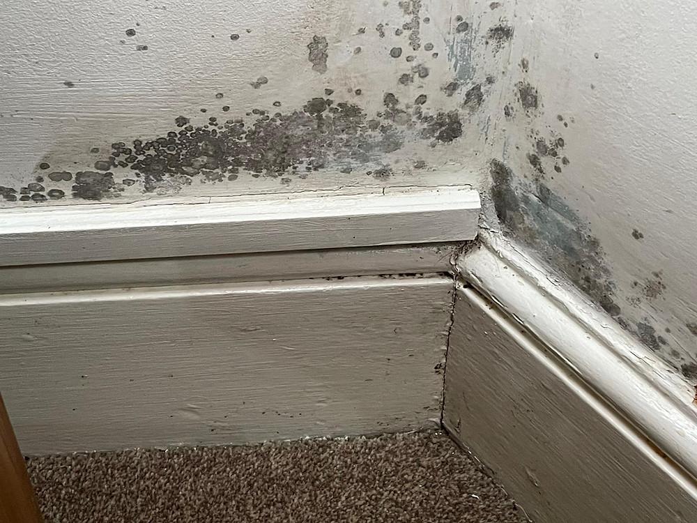 Damp to internal wall
