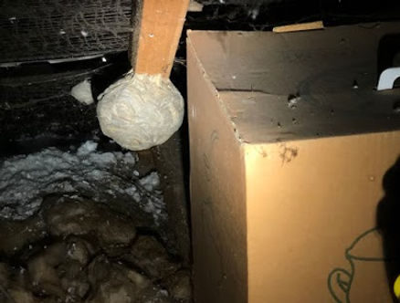 Wasps Nest Building Survey London.jpg