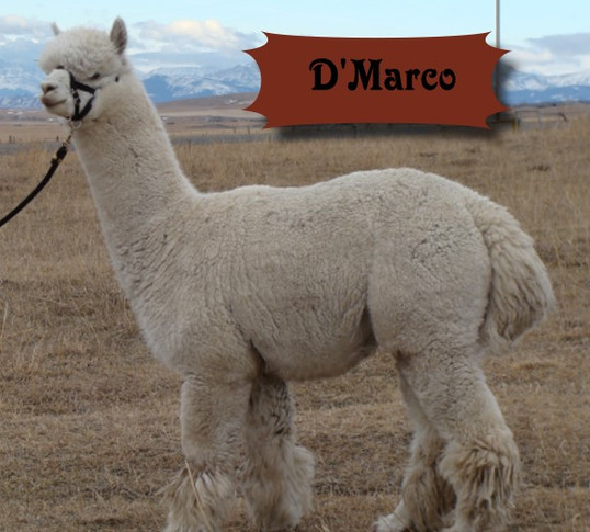 dmarco1.jpg