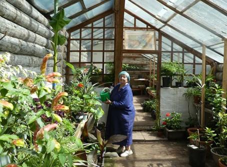 Яснополянский овощной и лекарственный огород: дереза, устричный корешок, калуфер….