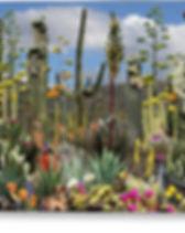 cactus-hill-moni-norng.jpg