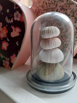 globe oursins cabinet de curiosités musée d'histoire naturelle cam le mac