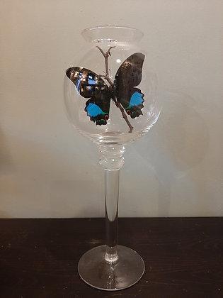 Papillon entomologie