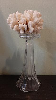 corail sur socle en verre