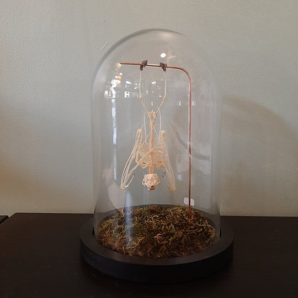 globe squelette chauve-souris taxidermie cabinet de curiosités cam le mac