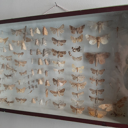 boite d'entomologie