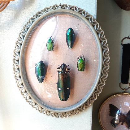 cadre bombé scarabées
