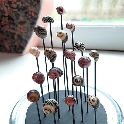globe coquillages cabinet de curiosités musée d'histoire naturelle cam le mac