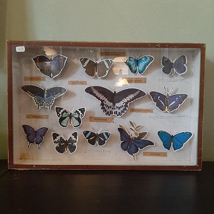 boite d'entomologie papillons papier