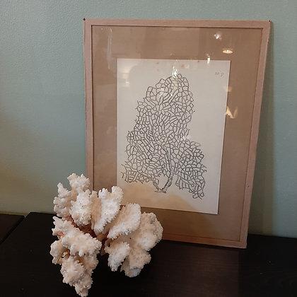 tableau corail