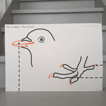 planche vintage pigeon