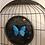 papillon bleu entomologie taxidermie deyrolle