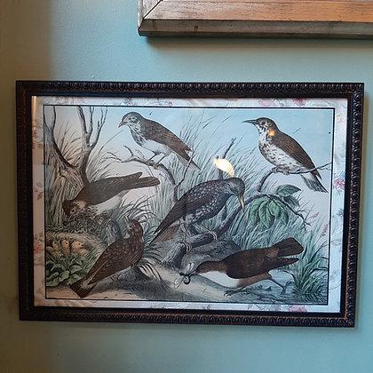 gravure oiseaux