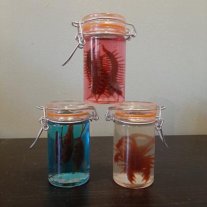 Trio d'insectes en bocaux