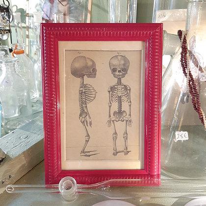 cadre squelette enfant