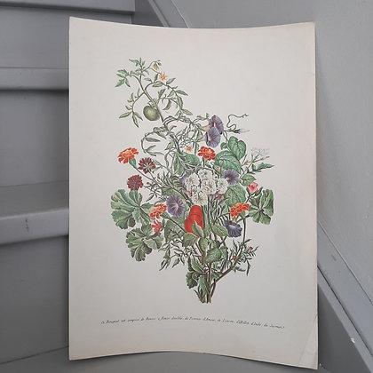 planche botanique bouquet