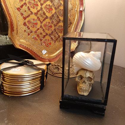 décoration vitrine vanité coquillage cabinet de curiosités création cam le mac