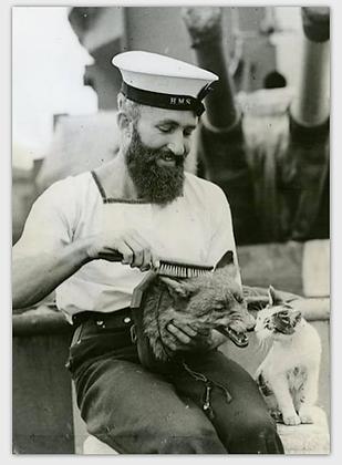 carte marin au renard