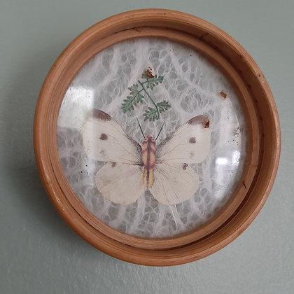 sous-verres papillons vintage boutique cabinet de curiosités cam le mac