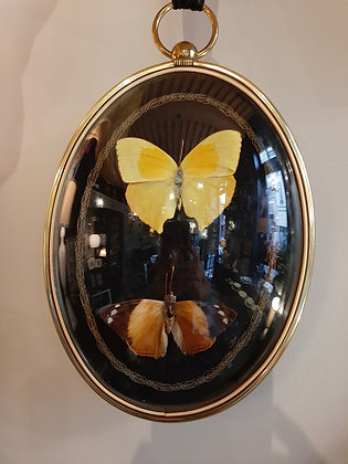 globe bombé entomologie papillons cabinet de curiosités boutique cam le mac