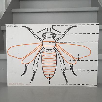 planche vintage l'abeille