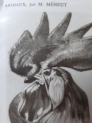 planche animaliere coq