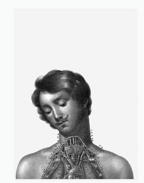 carte anatomie