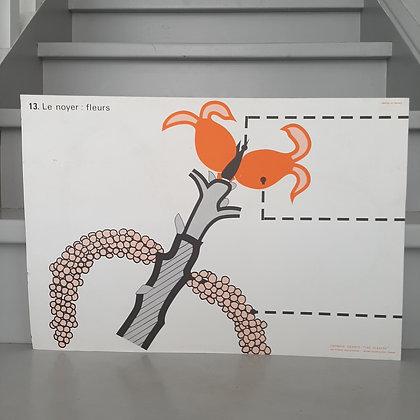planche vintage fleurs de noyer