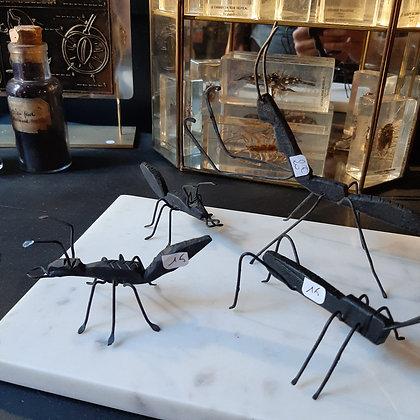 insectes métal