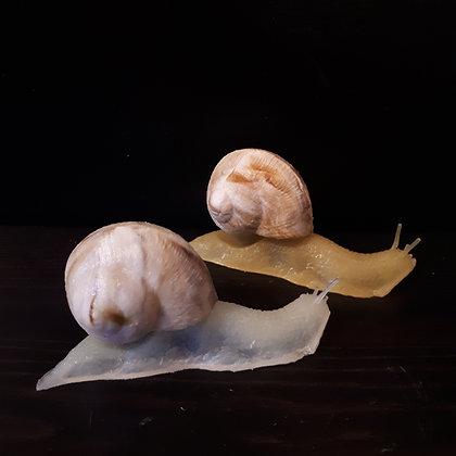 escargots latex