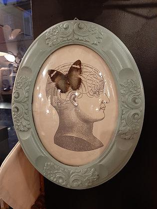cadre entomologie phrénologie papillon vintage création cam le mac