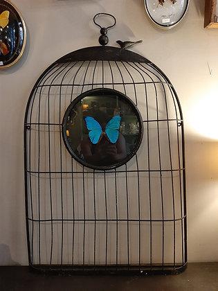entomologie papillon cage à oiseaux brocante cabinet de curiosités boutique cam le mac
