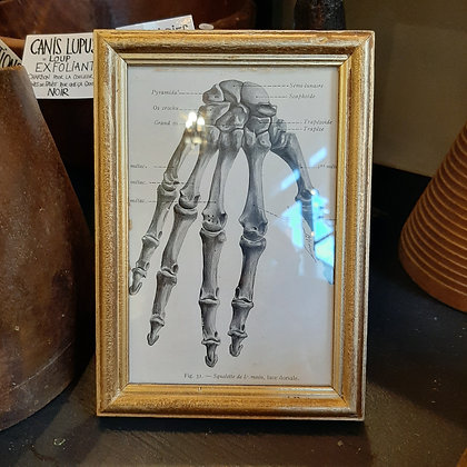 cadre squelette main