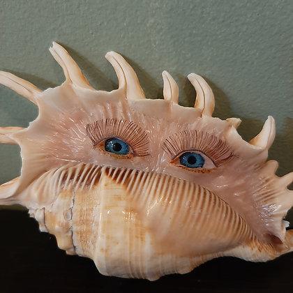 curiosité coquillage yeux chimère créature fantastique création catherine guerre cabinet de curiosités cam le mac