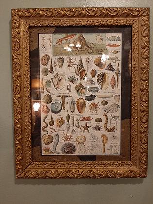 gravure mollusques