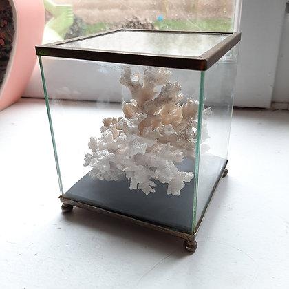 vitrine corail cabinet de curiosités musée d'histoire naturelle cam le mac