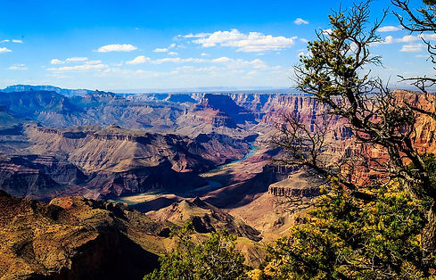 1200px-Canyon_River_Tree_(165872763).jpe