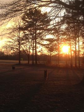 Front yard sunset