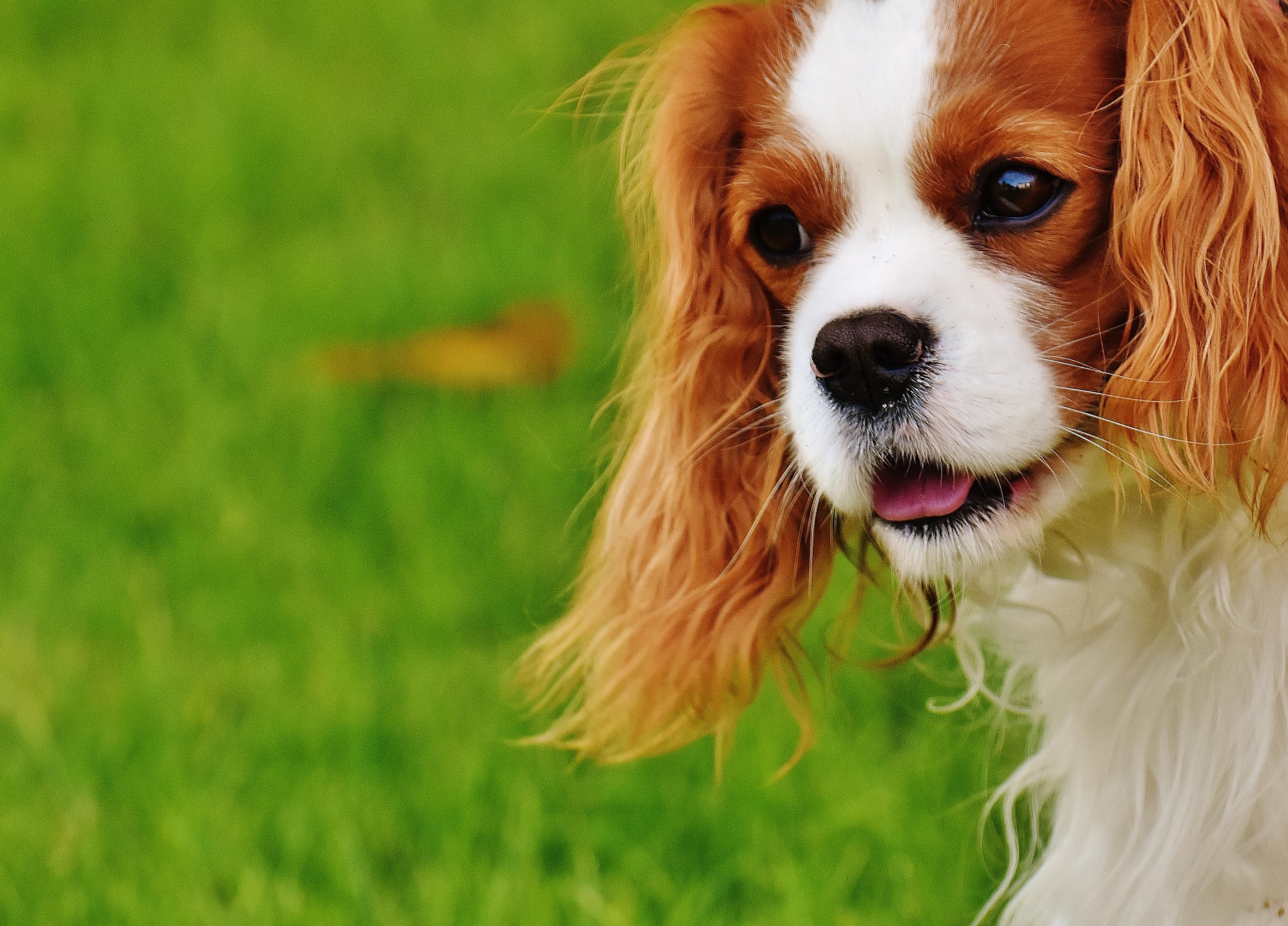 reward your reactive dog when he s calm kitchener pet services