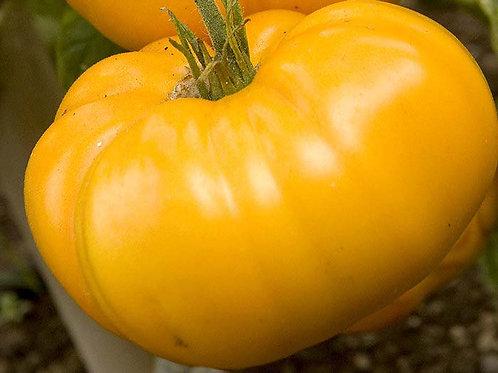 Yellow Brandywine Tomato per Lbs