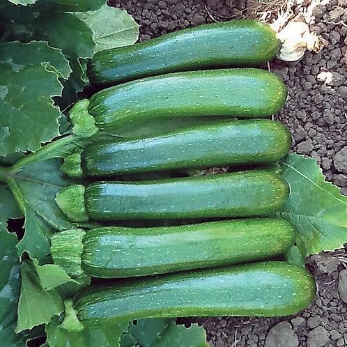Green Zucchini per Lbs.