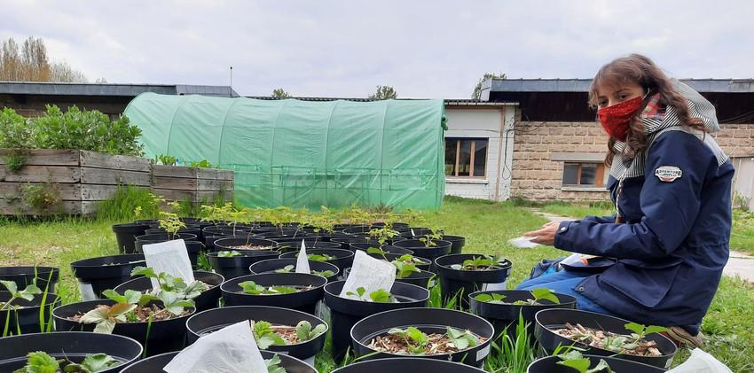 Le jardin, aussi un lieu de recherche-action sur la biodiversité et la pollinisation