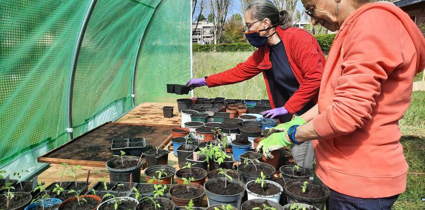 Atelier jardinage avec des bénévoles