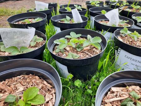 Les pollinisateurs : des ouvriers (agricoles) essentiels à la biodiversité urbaine