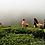 Thumbnail: Thé noir d'Inde - Assam Balijan OP - 100 gr