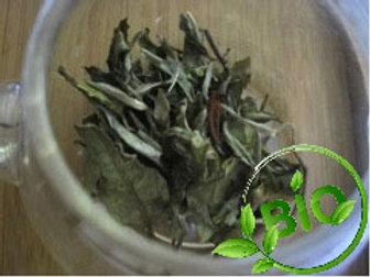 Thé blanc - Pai-mu-tan - BIO - 100 g