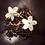 Thumbnail: Thé noir de Chine - Fine Jasmin - 100 gr