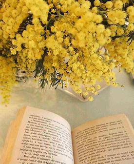 mimosa-4061081_1920_R.jpg